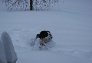 Snow days wreck havoc on working moms but dogs love it