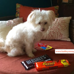 Giant sized candy and pint sized dog