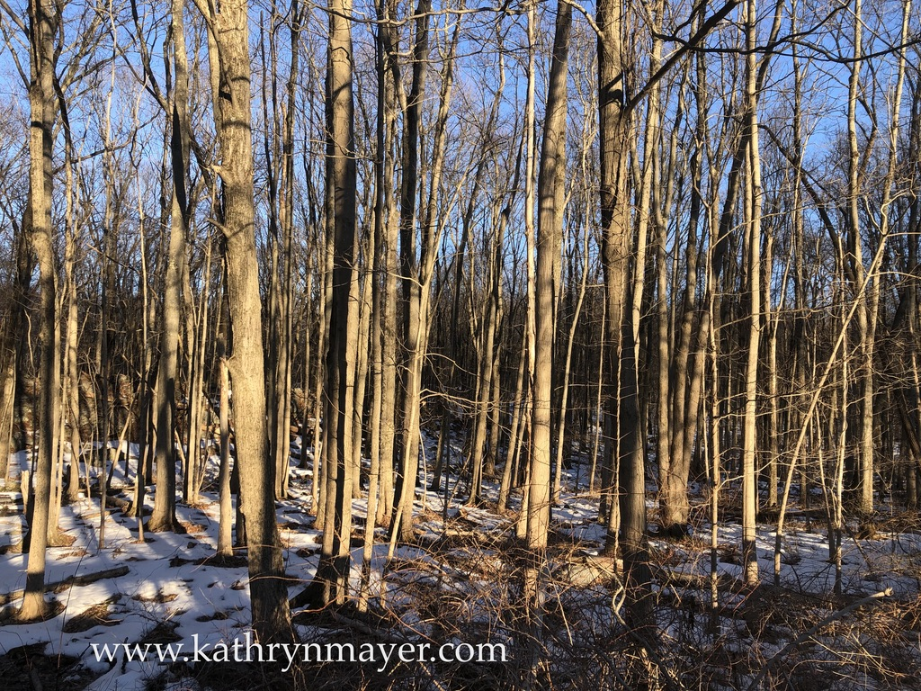 winter light on forest trees